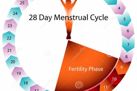 Metodo Del Calendario.Metodo Del Ritmo Sexo Seguro